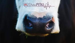vaca-dietapyr